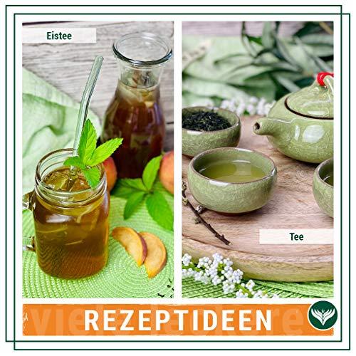 Grüner Tee – Japanischer BIO Sencha Grüntee – Original Uchiyama Sencha aus Japan (250g) von Azafran® - 5